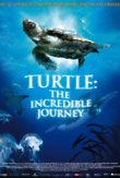 Turtle: The Incredible Journey DVD Release Date
