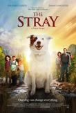 The Stray DVD Release Date